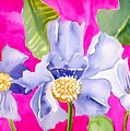 Big Pink  Flowers by Janet Doggett