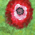Big Red Flower by Alexis Grone