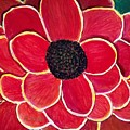 Big Red Zinnia Flower by Anne Sands