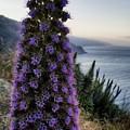 Big Sur Mornings by Beth LaFata