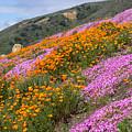 Big Sur Spring by Kris Hiemstra