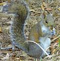 Big Tail Little Nut by D Hackett