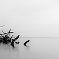 Big Talbot Island Black And White by Paul Griffin