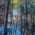 Big Thicket Water Reflection by Bob Phillips
