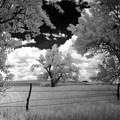 big tree in field IR by Mike Scheufler