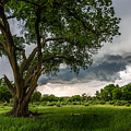 Big Tree - Tall Cottonwood And Storm In Texas Panhandle by Southern Plains Photography