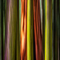 Big Trees Abstract by Rikk Flohr