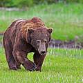 Big Ugly Grizzly Boar Claws by David Burke