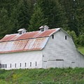 Big White Old Barn With Rusty Roof  Washington State by Laurie Kidd