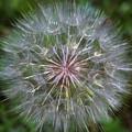 Big Wish by Linda Sannuti