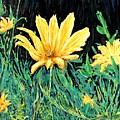Big Yellow by Ian  MacDonald
