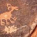 Bighorn Petroglyph by Susan Candelario
