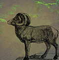 Bighorn Sheep  by Movie Poster Prints