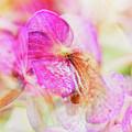 Bigleaf Hydrangea Abstract by Nick Biemans