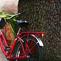 Bike Resting by Joan  Minchak