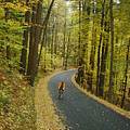 Biker On Road Amidst Fall Foliage by Skip Brown