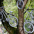 Bikes In A Tree by Helen Northcott