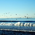 Billowing White Waves And Seagulls by Delores Malcomson