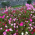 Biltmore Garden by Larry Mccrea
