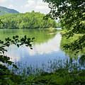 Biogradska Gora Forest  by Ruth Hofshi
