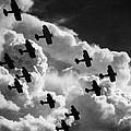 Biplanes, C1917 by Granger