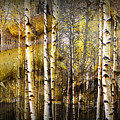 Birch Bark And Trees Abstract by Randall Nyhof
