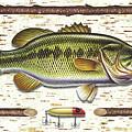 Birch Bass by JQ Licensing
