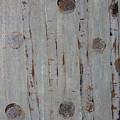 Birch - Fog 2 by Jacqueline Athmann