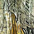 Birch Forest by Sarah Loft