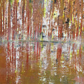 Birch In Abstract by Gary Smith