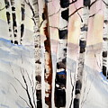 Birch In The Snow by Lisa Schorr