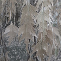 Birch Leaves In Beige by Donald S Hall