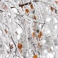 Frost Birch  by Boris Andresyuk