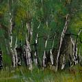 Birch Tree Panorama by David Patterson