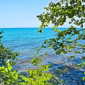 Birch Trees Above Lake Superior Off North Country Trail In Pictured Rocks National Lakeshore-mi by Ruth Hager