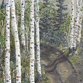 Birch Trees Along Kennys Road  2 by J O Huppler