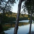 Birch Trees Along The Lake by Mary Lynne Crispo