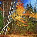Birch Trees - Autumn by Nikolyn McDonald