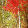 Birch Trees In Autumn by Terry Davis