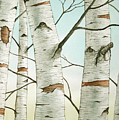 Birch Trees In Late Autumn by Christopher Shellhammer
