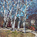 Birch Trees Next Door by Ylli Haruni