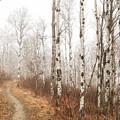 Birch Walk by Kendra Keir