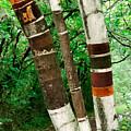 Birch Wood Layers by Crystal Raetzel