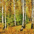Birches And Spruces by Dragica Micki Fortuna