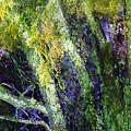 Birches by Anne Weirich