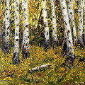 Birches by Arturas Slapsys