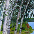 Birches At First Connecticut Lake by Linda Feinberg