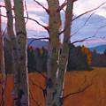 Birches At Twilight by Robert Bissett