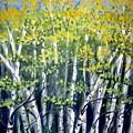 Birches by Sharon Marcella Marston