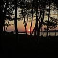 Birches Watch The Sunset by Faith Harron Boudreau